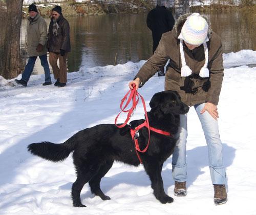 Pomoc zwierzętom - Piesek na śniegu