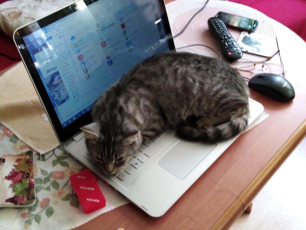 Pomoc zwierzętom - kotek na laptopie