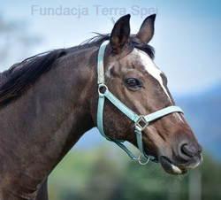 pomoc zwierzętom w tym koniom