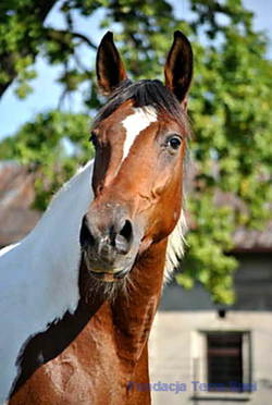 nasze konie - Katia