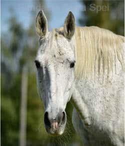 nasze konie - Baśka