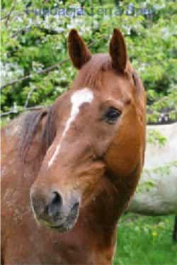 nasze konie - Clowfinger