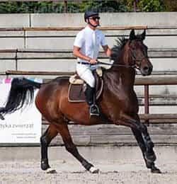 nasze konie - Don
