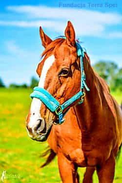 nasze konie - Groszek