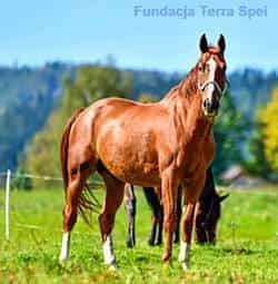 nasze konie - Hugo