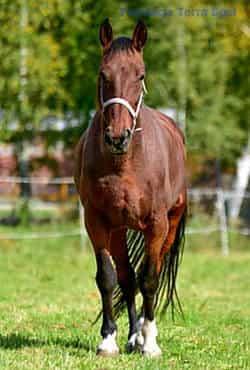 nasze konie - Largo