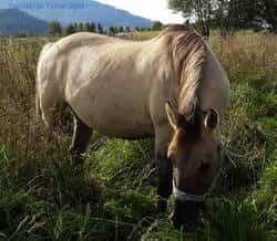 nasze konie - Marmota