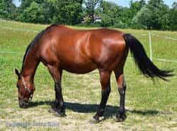 nasze konie - Optimus